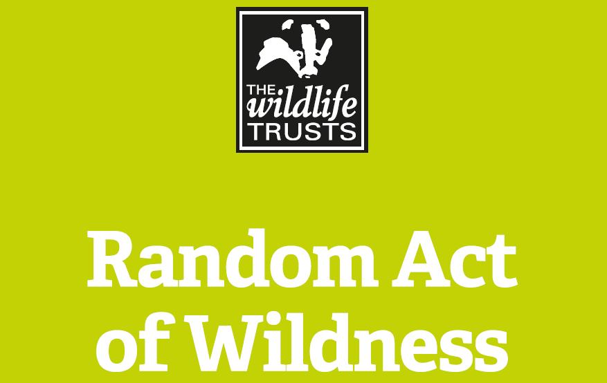 Random Acts of Wildness