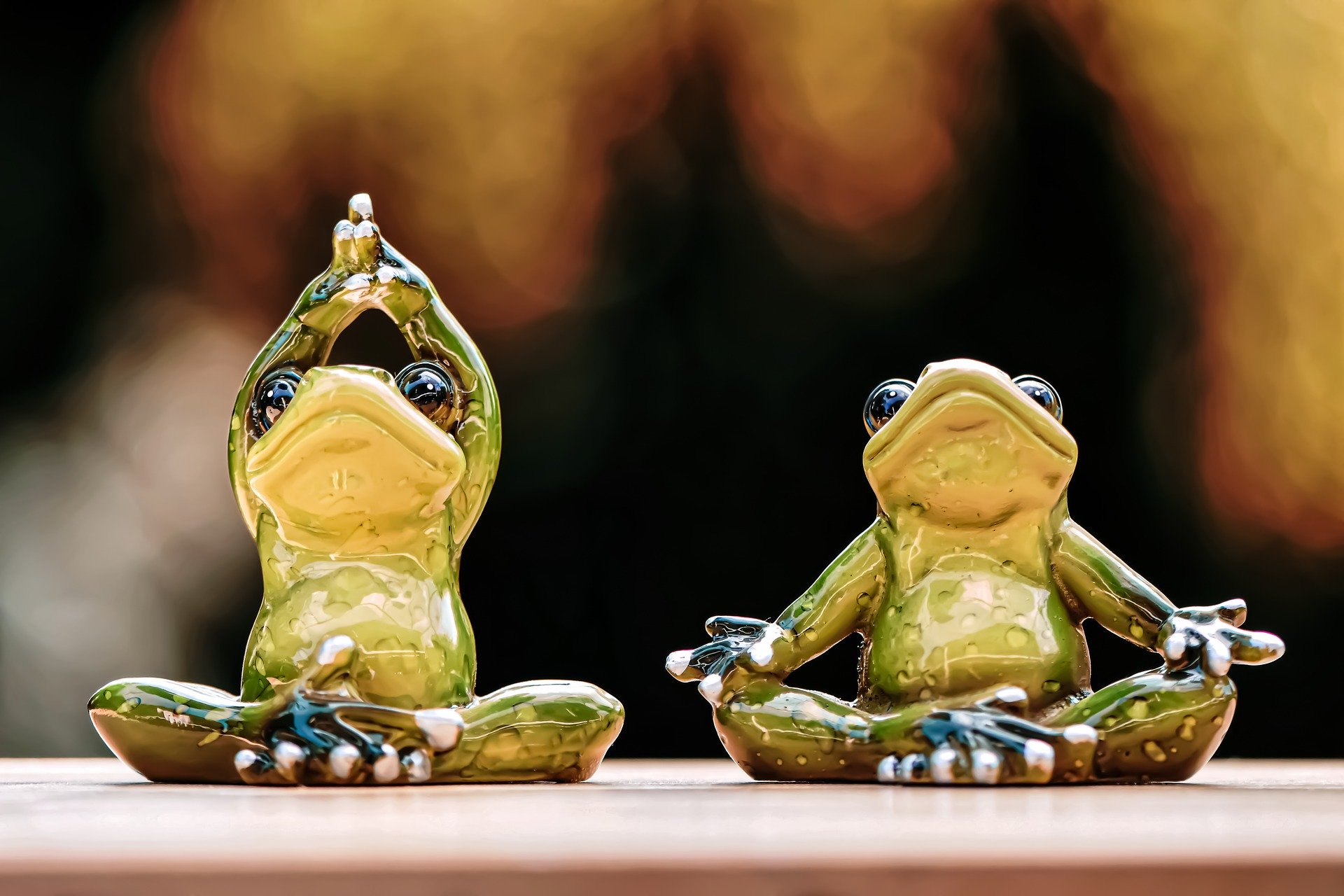 Wildlife Yoga